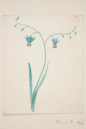 [Blue flower]