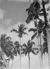 Probably on Tokelau. Taken during Pacific tour wit...