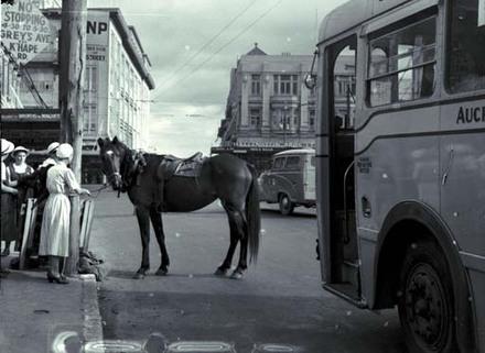 Horse at parking meter