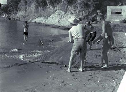Auckland beach scene.