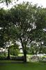 Memorial tree, St Luke's Anglican Church view 2 (photo John Halpin December 2012) - CC BY John Halpin