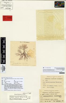 Batrachospermum terawhiticum