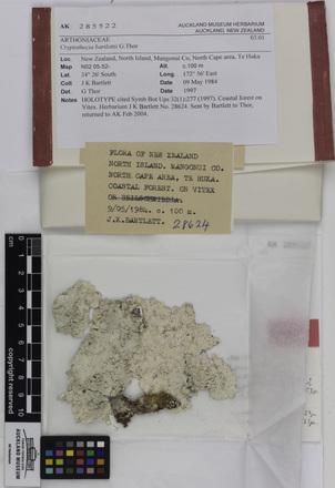Cryptothecia bartlettii